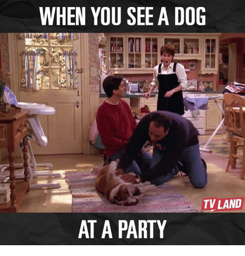 tv land: WHEN YOU SEE A DOG  TV LAND  AT A PARTY