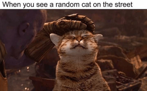 Memes, 🤖, and Cat: When you see a random cat on the street