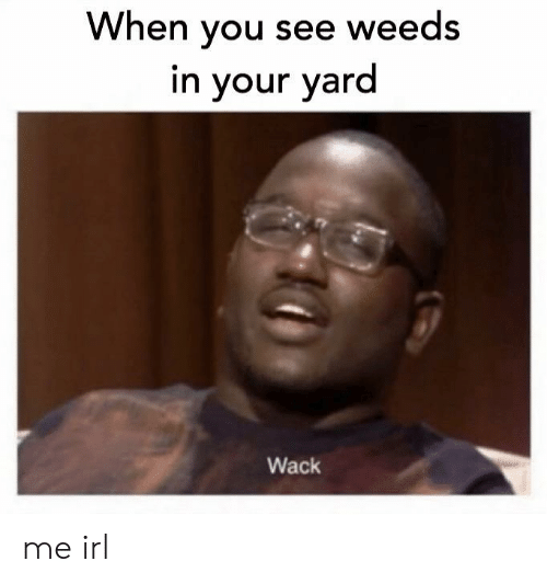 weeds: When you see weeds  in your yard  Wack me irl