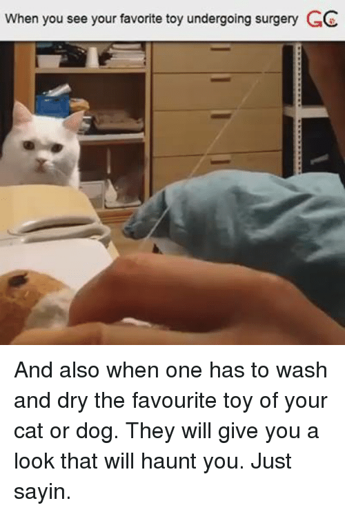 cat-or-dog: When you see your favorite toy undergoing surgery GC And also when one has to wash and dry the favourite toy of your cat or dog. They will give you a look that will haunt you. Just sayin.