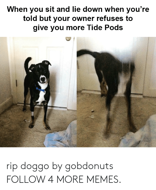 Dank, Memes, and Target: When you sit and lie down when you're  told but your owner refuses to  give you more Tide Pods rip doggo by gobdonuts FOLLOW 4 MORE MEMES.
