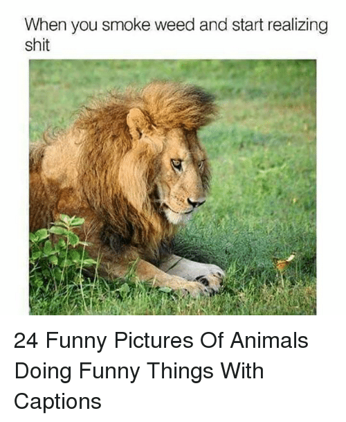 Funny Pictures Of: When you smoke weed and start realizing  shit 24 Funny Pictures Of Animals Doing Funny Things With Captions