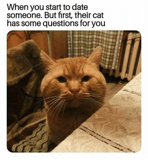 Memes, Date, and 🤖: When you start to date  someone. But first, their cat  has some questions for you