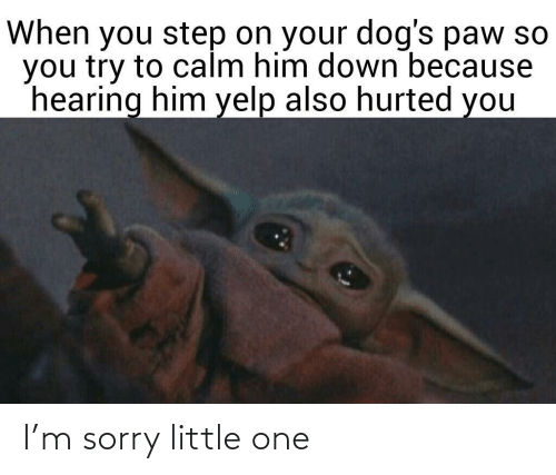 hearing: When you step on your dog's paw so  you try to calm him down because  hearing him yelp also hurted you I'm sorry little one