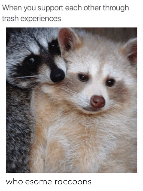 Trash, Wholesome, and You: When you support each other through  trash experiences wholesome raccoons