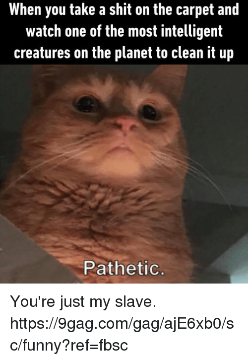 9gag, Dank, and Funny: When you take a shit on the carpet and  watch one of the most intelligent  creatures on the planet to clean it up  Pathetic. You're just my slave.  https://9gag.com/gag/ajE6xb0/sc/funny?ref=fbsc