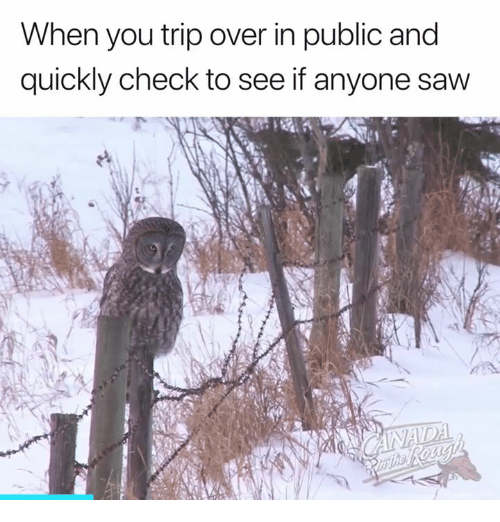 Saw, Check, and Public: When you trip over in public and  quickly check to see if anyone saw