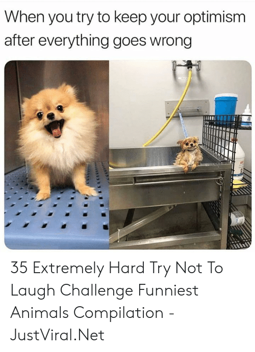 Extremely: When you try to keep your optimism  after everything goes wrong 35 Extremely Hard Try Not To Laugh Challenge Funniest Animals Compilation - JustViral.Net