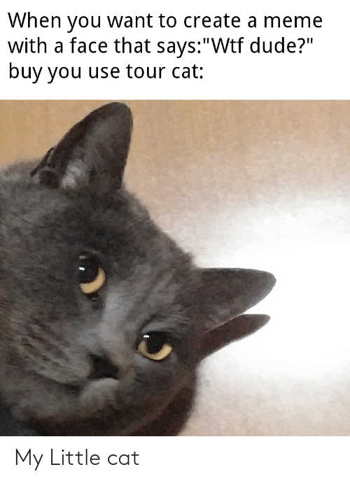 """Create A Meme: When you want to create a meme  with a face that says:""""Wtf dude?""""  buy you use tour cat: My Little cat"""