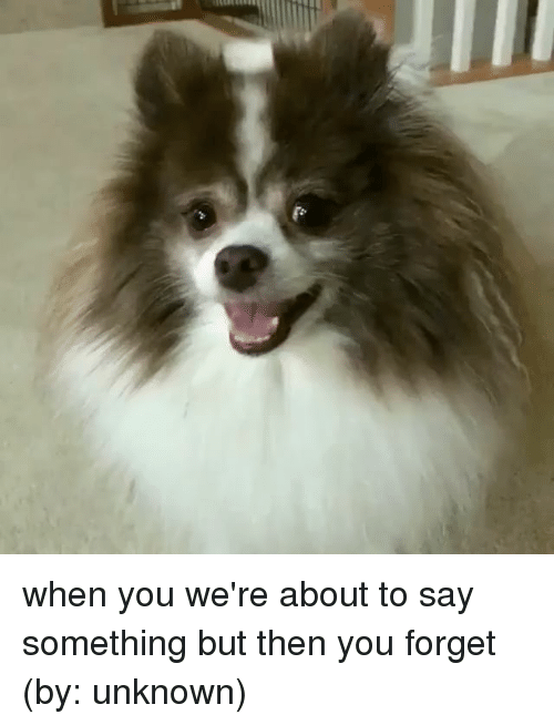 About To Say Something: when you we're about to say something but then you forget (by: unknown)