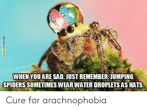cure: WHEN YOUARE SAD JUST REMEMBER JUMPING  SPIDERS SOMETIMES WEAR WATER DROPLETS AS HATS  Animalmemes Cure for arachnophobia