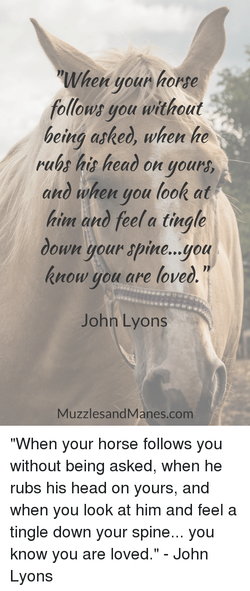 """Head, Horse, and Com: When youn horse  follows gou without  being asked, when he  rubs his heao on your  and when you look at  him and feel a tingle  down your apine...you  know you are loved  John Lyons  MuzzlesandManes.com """"When your horse follows you without being asked, when he rubs his head on yours, and when you look at him and feel a tingle down your spine... you know you are loved."""" - John Lyons"""