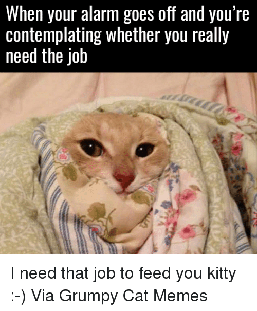Cats, Kitties, and Meme: When your alarm goes off and you're  Contemplating Whether you really  need the Job I need that job to feed you kitty :-) Via Grumpy Cat Memes