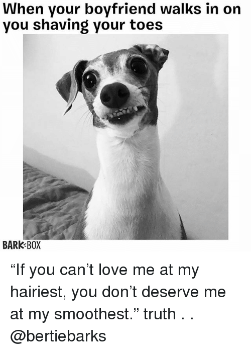 "Love, Memes, and Boyfriend: When your boyfriend walks in on  you shaving your toes  BARK BOX ""If you can't love me at my hairiest, you don't deserve me at my smoothest."" truth . . @bertiebarks"