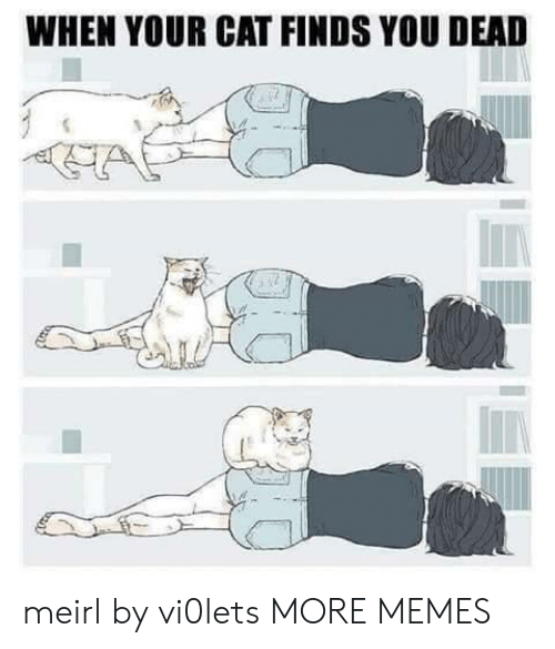 You Dead: WHEN YOUR CAT FINDS YOU DEAD meirl by vi0lets MORE MEMES