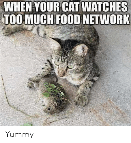 Food, Food Network, and Watches: WHEN YOUR CAT WATCHES  TOOMUCH FOOD NETWORK Yummy