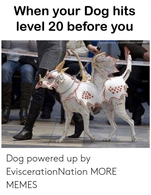 Dank, Memes, and Target: When your Dog hits  level 20 before you  tacebook.com/ddndmemes Dog powered up by EviscerationNation MORE MEMES