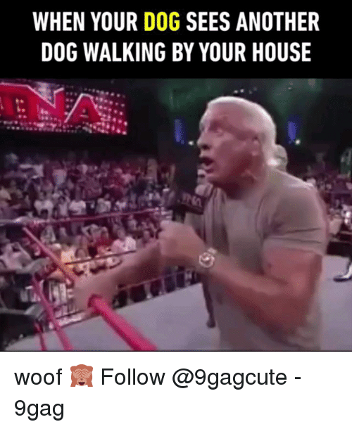 9gag, Memes, and House: WHEN YOUR DOG SEES ANOTHER  DOG WALKING BY YOUR HOUSE woof 🙈 Follow @9gagcute - 9gag
