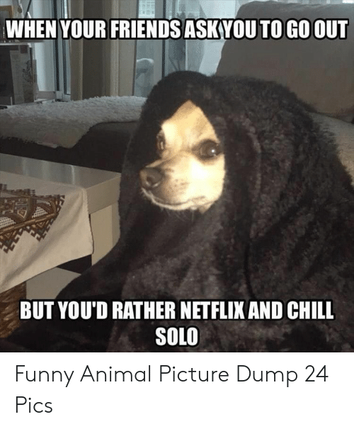 Netflix and chill: WHEN YOUR FRIENDS ASK VOU TO GO OUT  BUT YOU'D RATHER NETFLIX AND CHILL  SOLO Funny Animal Picture Dump 24 Pics