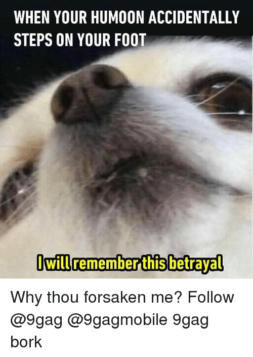 Børk: WHEN YOUR HUMOON ACCIDENTALLY  STEPS ON YOUR FOOT  Owill remember this betrayal Why thou forsaken me? Follow @9gag @9gagmobile 9gag bork