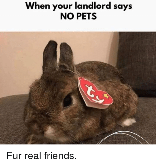 Real Friends: When your landlord says  NO PETS Fur real friends.