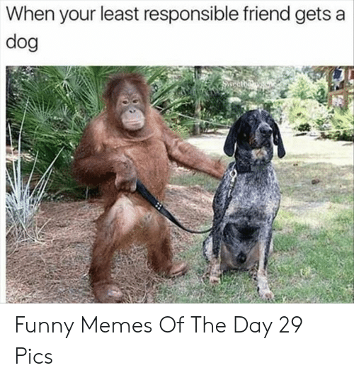 Funny, Memes, and Dog: When your least responsible friend gets a  dog  Swreatda Funny Memes Of The Day 29 Pics