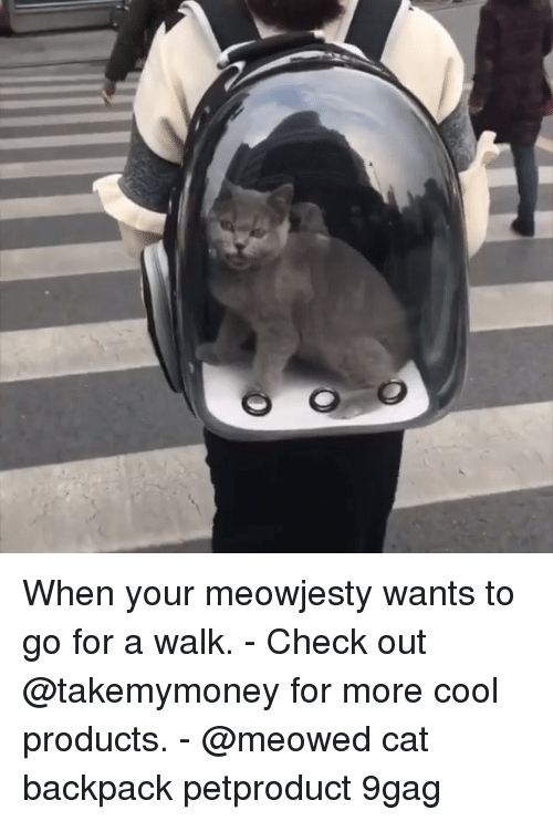 9gag, Memes, and Cool: When your meowjesty wants to go for a walk. - Check out @takemymoney for more cool products. - @meowed cat backpack petproduct 9gag