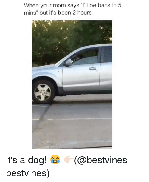 """Memes, Mom, and Back: When your mom says """"T'll be back in 5  mins"""" but it's been 2 hourss it's a dog! 😂 👉🏻(@bestvines bestvines)"""