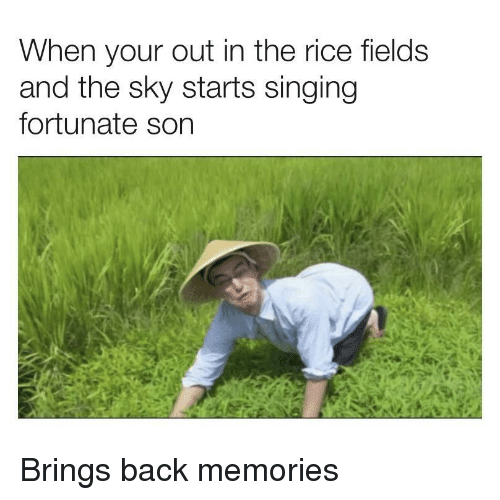 Singing, Back, and Rice: When your out in the rice fields  and the sky starts singing  fortunate son Brings back memories