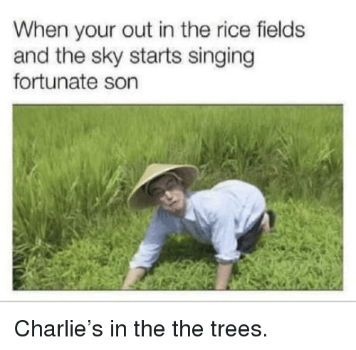 fortunate: When your out in the rice fields  and the sky starts singing  fortunate son Charlie's in the the trees.