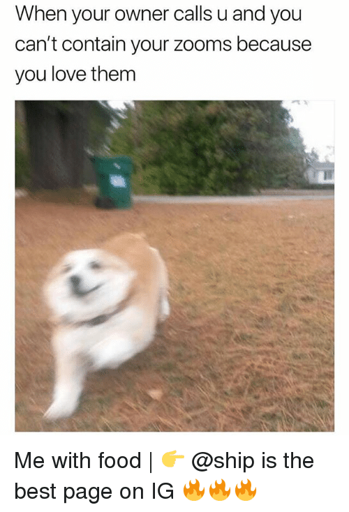 Food, Love, and Memes: When your owner calls u and you  can't contain your zooms because  you love them Me with food   👉 @ship is the best page on IG 🔥🔥🔥