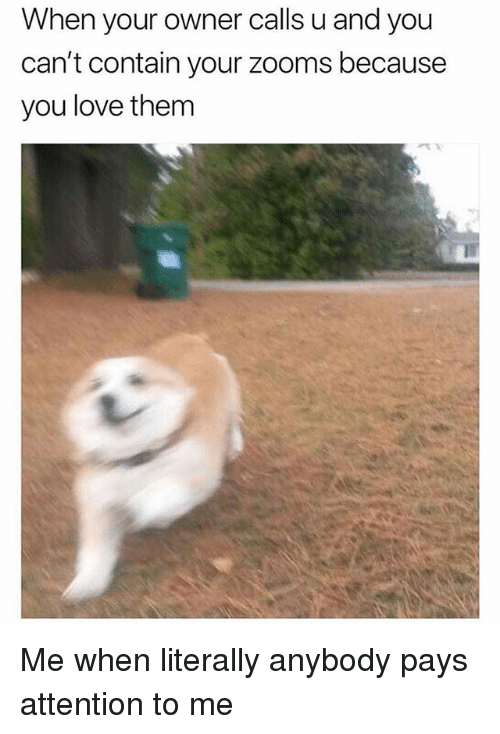 Funny, Love, and Girl Memes: When your owner calls u and you  can't contain your zooms because  you love them Me when literally anybody pays attention to me