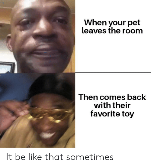 leaves: When your pet  leaves the room  Then comes back  with their  favorite toy It be like that sometimes
