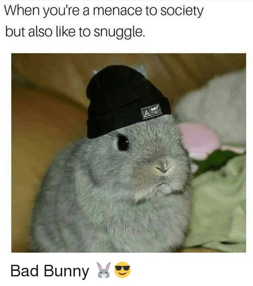 Bad, Memes, and 🤖: When you're a menace to society  but also like to snuggle. Bad Bunny 🐰😎