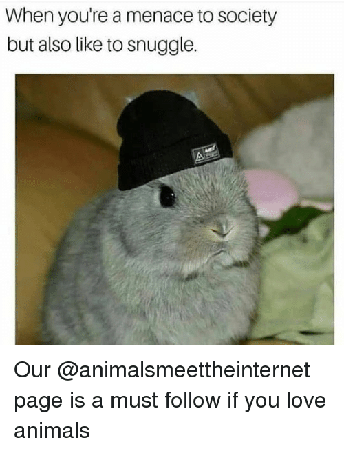 Animals, Love, and Dank Memes: When you're a menace to society  but also like to snuggle.  prloosocey Our @animalsmeettheinternet page is a must follow if you love animals