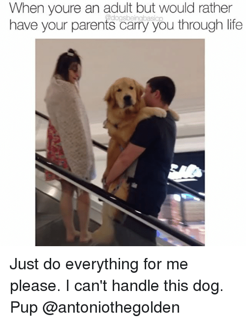 Cant Handle This: When youre an adult but would rather  2dogs basicp  have your parents carry you through life Just do everything for me please. I can't handle this dog. Pup @antoniothegolden