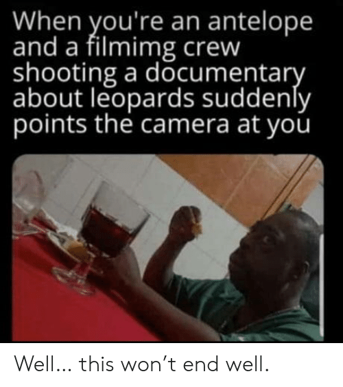 crew: When you're an antelope  and a filmimg crew  shooting a documentary  about leopards suddenly  points the camera at you Well… this won't end well.