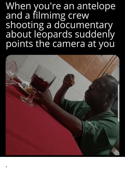 crew: When you're an antelope  and a filmimg crew  shooting a documentary  about leopards suddenly  points the camera at you .