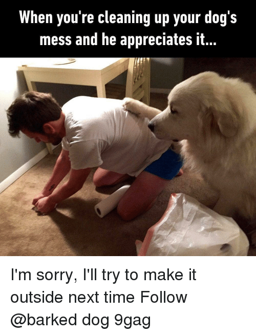 9gag, Dogs, and Memes: When you're cleaning up your dog's  mess and he appreciates it I'm sorry, I'll try to make it outside next time Follow @barked dog 9gag