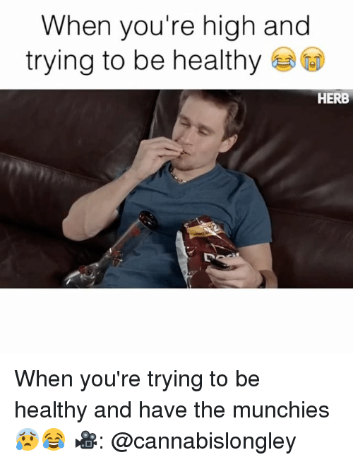 Your Highness: When you're high and  trying to be healthy  HERB When you're trying to be healthy and have the munchies 😰😂 🎥: @cannabislongley