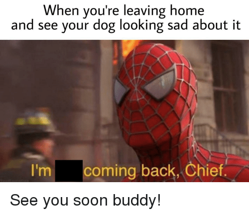 Soon..., Home, and Sad: When you're leaving home  and see your dog looking sad about it  I'm  coming back, Chief See you soon buddy!