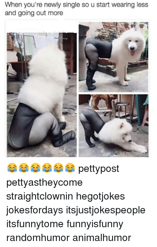 Newly Single: When you're newly single so u start wearing less  and going out more 😂😂😂😂😂😂 pettypost pettyastheycome straightclownin hegotjokes jokesfordays itsjustjokespeople itsfunnytome funnyisfunny randomhumor animalhumor