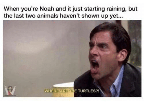 Animals, Noah, and Turtles: When you're Noah and it just starting raining, but  the last two animals haven't shown up yet...  WHERE ARE THE TURTLES?!