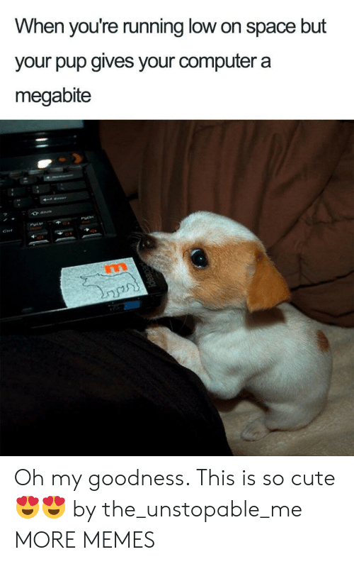 Cute, Dank, and Memes: When you're running low on space but  your pup gives your computer a  megabite  PO Oh my goodness. This is so cute 😍😍 by the_unstopable_me MORE MEMES