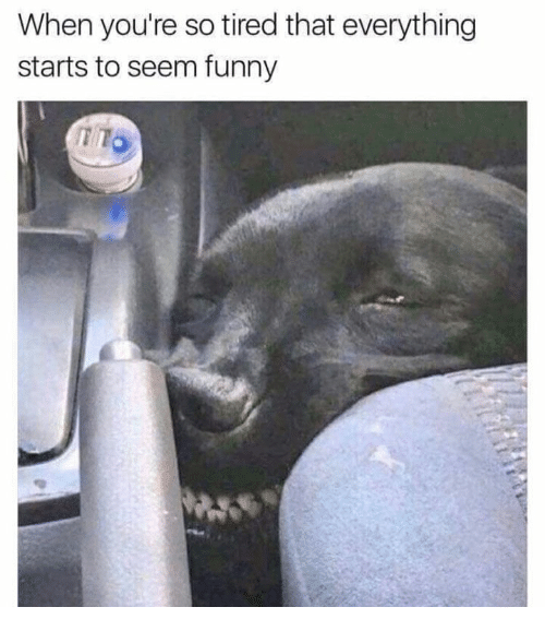 Funny, Tired, and Youre: When you're so tired that everything  starts to seem funny  TTO