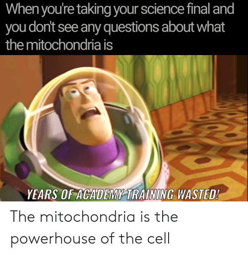 any questions: When you're taking your science final and  you don't see any questions about what  the mitochondria is  YEARS OF ACADEMY TRAINING WASTED! The mitochondria is the powerhouse of the cell