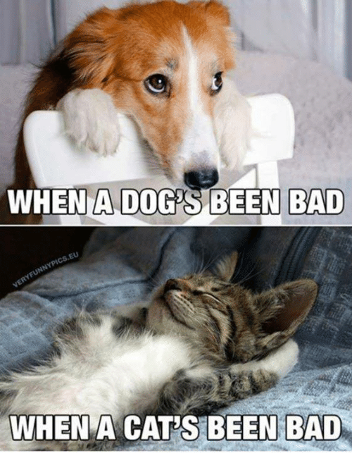 Bad, Cats, and Memes: WHENA DOYS BEEN BAD  EU  WHEN A CAT'S BEEN BAD