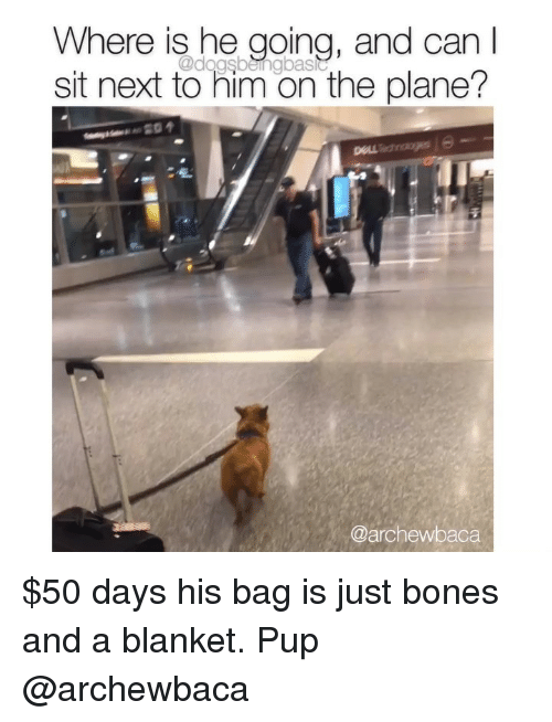 Bones, Memes, and Pup: Where is he going, and can I  sit next to him on the plane?  @dagsbeingbastc  @archewbaca $50 days his bag is just bones and a blanket. Pup @archewbaca