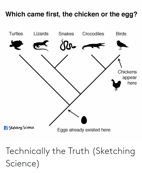 turtles: Which came first, the chicken or the egg?  Turtles  Lizards  Snakes  Crocodiles  Birds  Chickens  appear  here  A Sketching Science  Eggs already existed here Technically the Truth (Sketching Science)