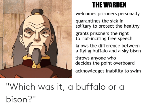 """Buffalo: """"Which was it, a buffalo or a bison?"""""""